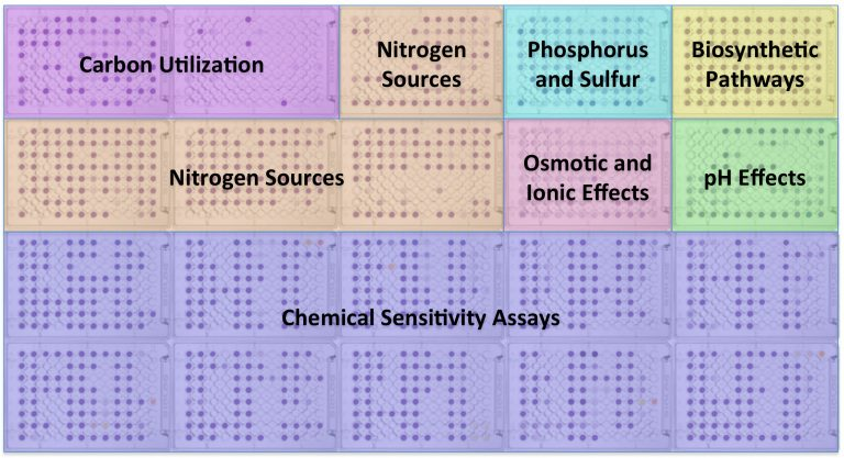 Phenotype MicroArray Plate